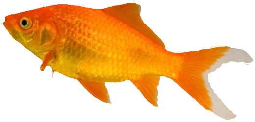 Fish food, treatments and accessories from The Pet Shop Worthing