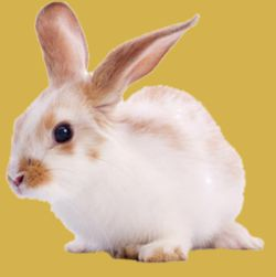 Everything for Your Small Animals & Birds from The Pet Shop Worthing